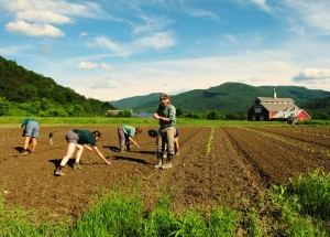 Planting time at The Farm at VYCC. (Megan Lubetkin '16/VYCC)
