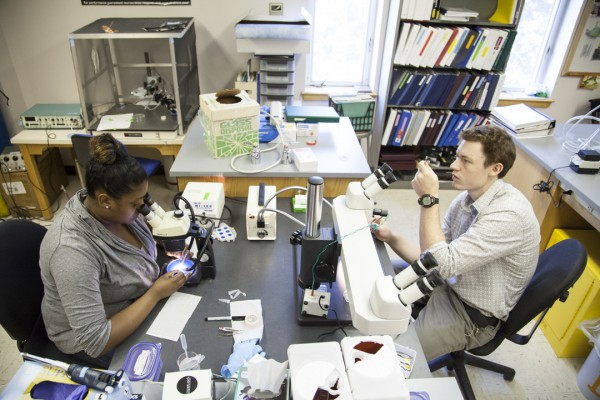 Caleb Glassman '14 and Destany Franklin '14 conduct research in a lab run by Nancy Kleckner, associate professor of neuroscience, on July 30, 2013. Photograph by Marc Glass/Bates College