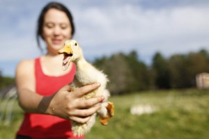 Ashleen O'Brien '15 of Edmonds, Wash., shows off a duckling during her summer 2013 internship at Nezinscot Farm, a 250-acre organic farm, store and cafe in Turner, Maine. (Mike Bradley/Bates College)
