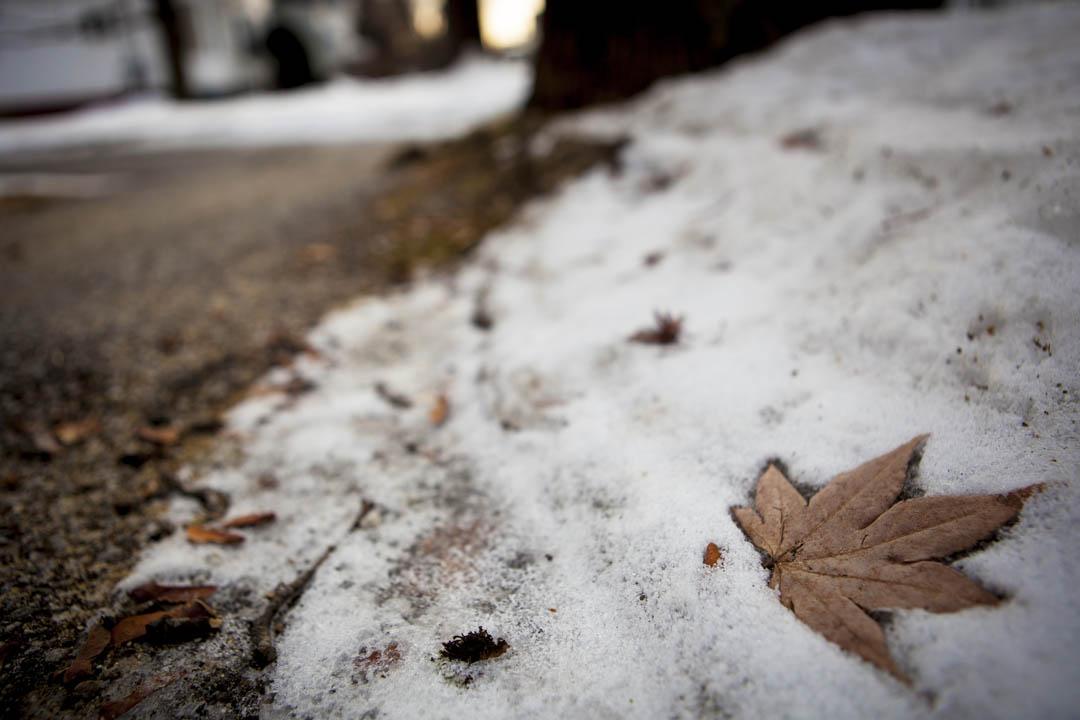 A fall leaf creates an imprint on a snowy sidewalk on Nichols Street, adjacent to the Bates historic Quad. (Sarah Crosby/Bates College)