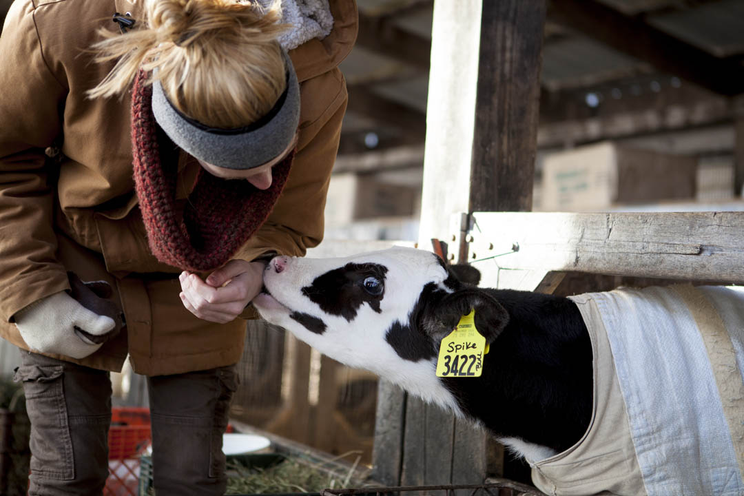 "A student in the course ""Literature of Agriculture"" joins a field trip to the R.E Hemond dairy farm. Jane Costlow, Clark A. Griffith Professor of Environmental Studies, teaches the course. (Sarah Crosby/Bates College)"