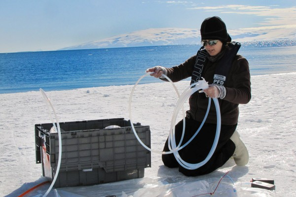 Kneeling on sea ice in the Ross Sea, Erin Bertrand '05 prepares to take a 1,000-liter sample of seawater as part of a 2013 study of whether the phytoplankton and bacteria in the seawater are starved for iron. (Photo by Jeff McQuaid)