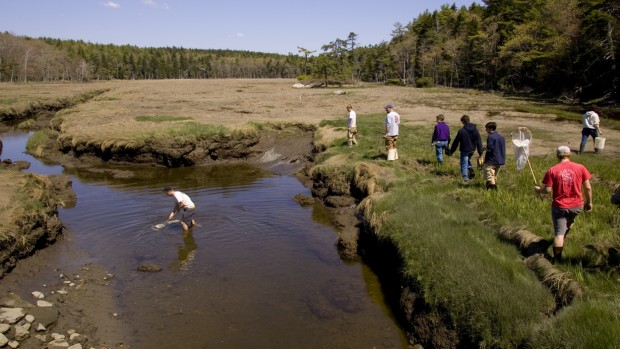 A Short Term course on hydrogeology, taught by Associate Professor Beverly Johnson, visits the Bates-Morse Mountain Conservation Area. (Phyllis Graber Jensen/Bates College)