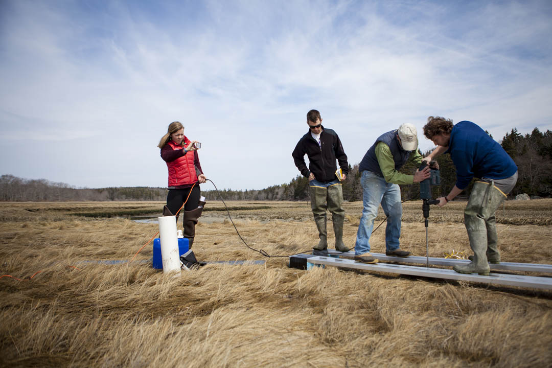 Geology students and faculty install research equipment in the Sprague Marsh at Bates-Morse Mountain in Phippsburg.  (Sarah Crosby/Bates College)