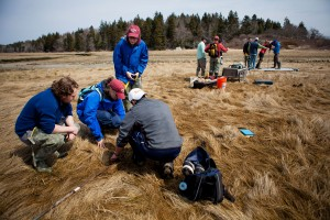 Students and faculty, including geology professor Bev Johnson, install research equipment on the Sprague Marsh at Bates-Morse Mountain on April 22, 2014. (Sarah Crosby/Bates College)