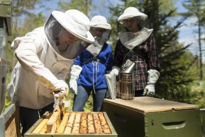 """Jessica Duserick '18 of Arlington, Mass., removes a frame from a hive at a local apiary. She was in the """"Honeybee Science"""" Short Term course, which was taught by Associate Professor of Chemistry Paula Schlax and explored increased honeybee mortality, looking specifically at the suspected roles of varroa mites, viruses, and pesticides. (Josh Kuckens/Bates College) """