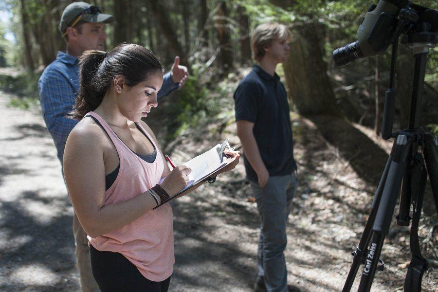 Emma Katz '17 of Holmdel, N.J., records hemlock observations at Bates–Morse Mountain on May 14. (Josh Kuckens/Bates College)