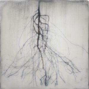"""Fir Roots,"" a 2015 photograph by Shoshannah White, appears in the summer 2015 Bates College Museum of Art exhibition ""Points of View."" Courtesy of the artist."