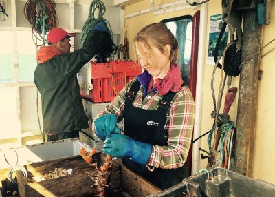 Kate McNally '17 bands lobsters on a lobster boat off Grand Manan Island.