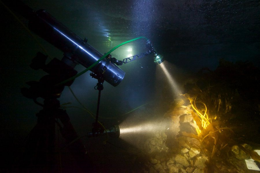 "Researchers used a prototype hyperspectral imager, which collects and processes information from across the electromagnetic spectrum, to create optical ""fingerprints"" of different species on the sea floor during the polar night. (Geir Johnsen NTNU/UNIS)"