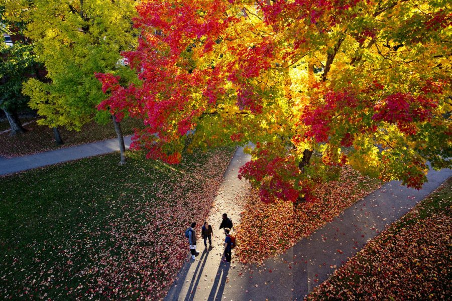 From Hedge Hall's heights, a bird's eye view of the season: fall colors, long shadows, shorter days, and deep conversations. (Phyllis Graber Jensen/Bates College)
