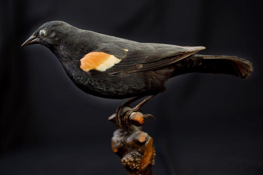 G2-140530_Stanton_Birds_0131