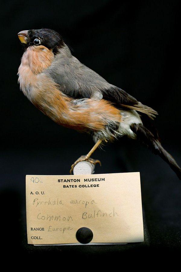 G2-140530_Stanton_Birds_0148