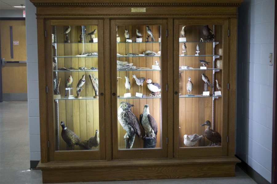 The Waterman display case in Carnegie Science Hall. (Phyllis Graber Jensen/Bates College)