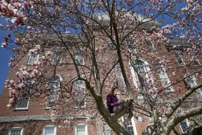 "For biology and English double major Cheyenne Cannaozzo '16 of Pembroke, N.H., the sun-dappled Hathorn magnolia is the right place to practice lines for A Midsummer Night's Dream that she'll deliver ""in the midst of the forest."" (Phyllis Graber Jensen/Bates College)"