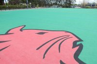 The current Bobcat emblem on the new GreenFields TX turf will replace this outmoded likeness on the Campus Avenue Field. (Doug Hubley/Bates College)