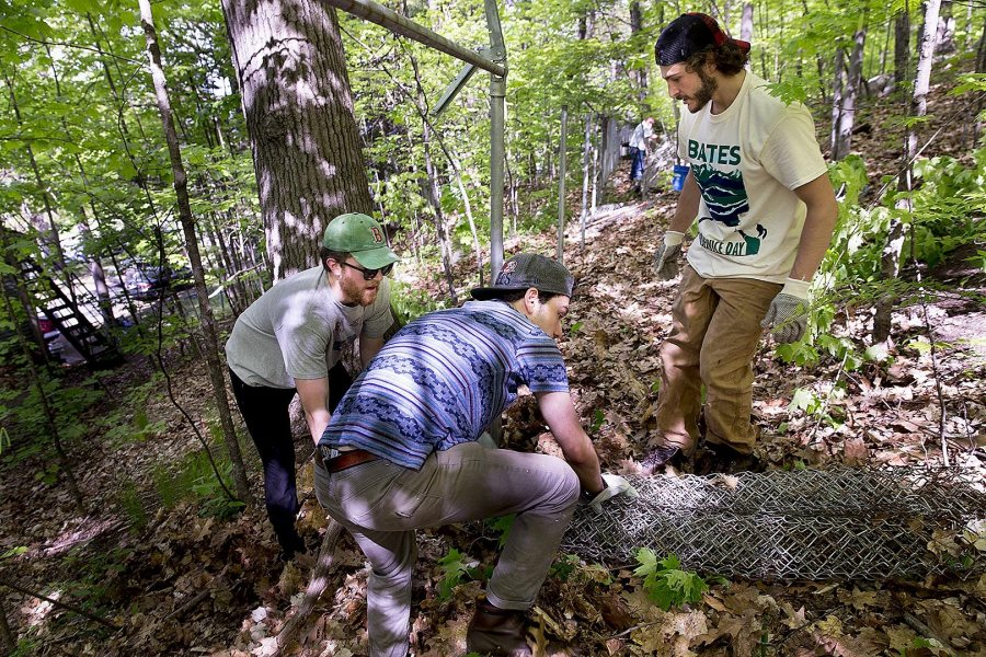 From left, Oliver Farnum '19 of Marshfield, Mass., Jeremy Mack '16 of Brooklyn, N.Y., and George Fiske '19 of West Hartford, Conn., grapple with chain-link fencing during the EcoService Day project on Mount David on May 21. (Phyllis Graber Jensen/Bates College)