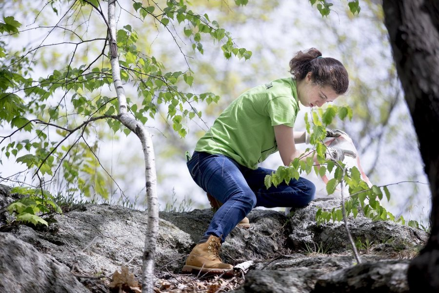 Rachel Minkovitz '19 of Wilmington, Del., picks up trash on Mount David during the EcoService Day project on May 21. (Phyllis Graber Jensen/Bates College)