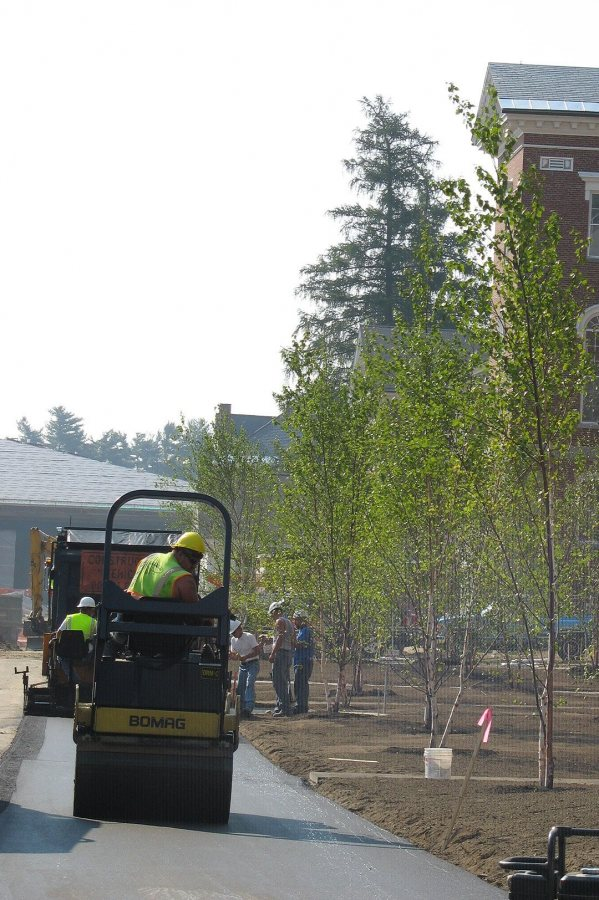 Pavers and new birch trees on Alumni Walk. (Doug Hubley/Bates College)