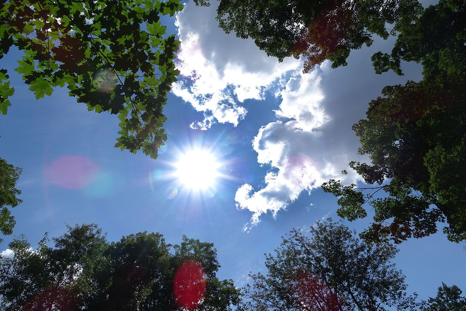 Now there's a hole in the canopy where the sun comes in. (Jay Burns / Bates College)