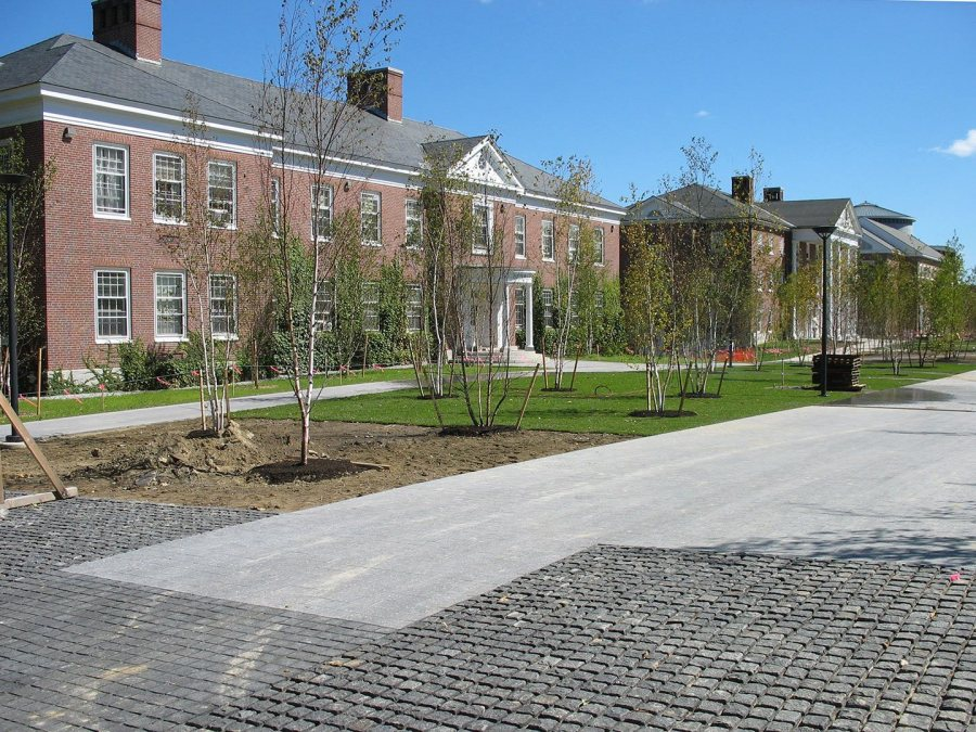 Half-grassed: Scilla bulbs will be planted, then sodded over, in the bare patches on Alumni Walk. (Doug Hubley/Bates College)