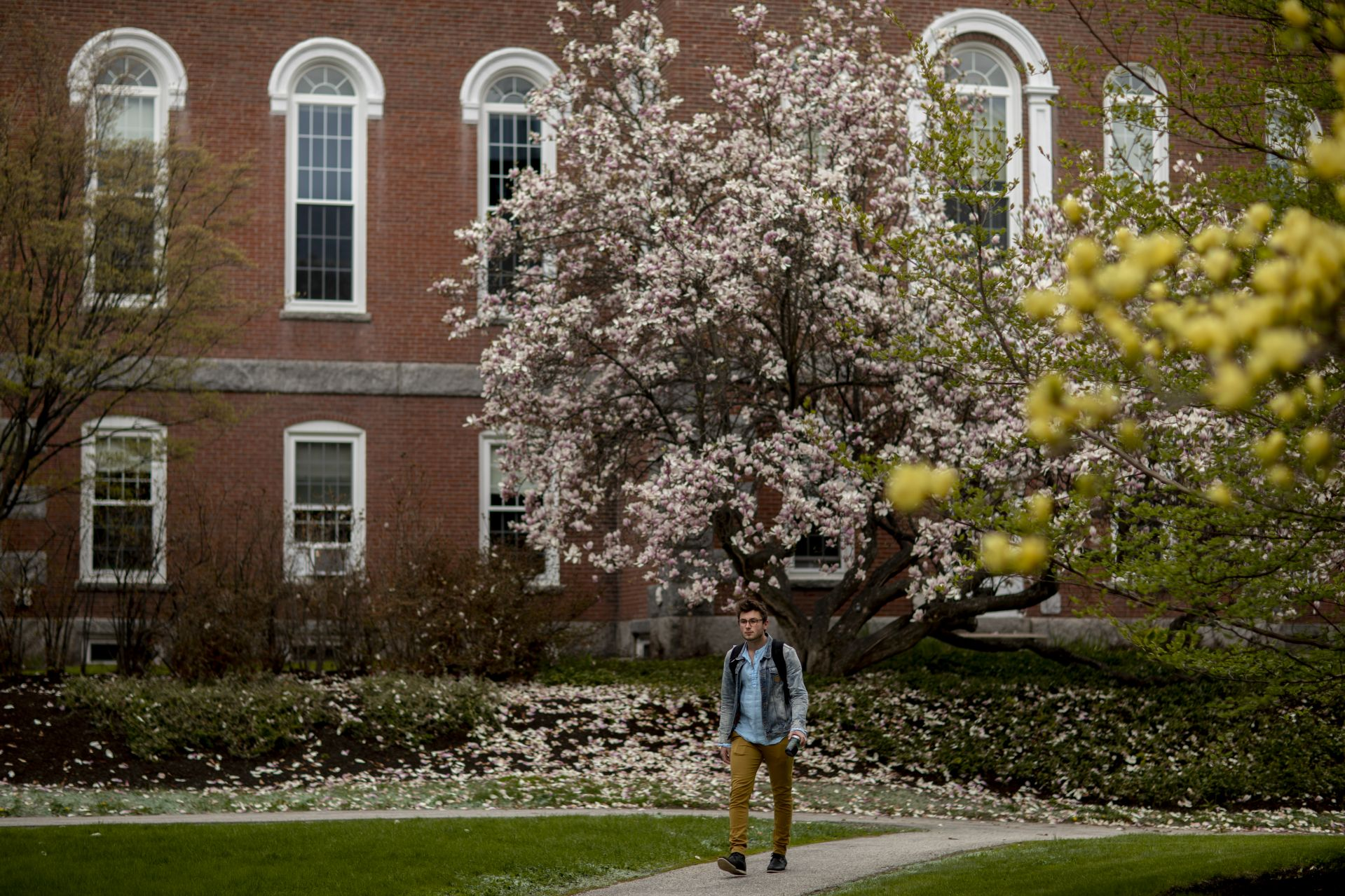 The Hathorn Hall magnolia tree lets go, and Reed Sandbach '20 walks on by.