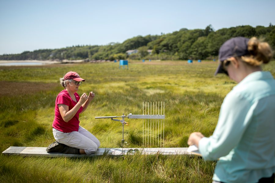 Professor of Geology Beverly Johnson uses a sediment elevation table to measure the height of the Sprague River Salt Marsh, part of the Bates–Morse Mountain Conservation Area, in August 2018. At right is Claire Enterline, senior planner of the Maine Coastal Mapping Initiative, Maine Coastal Program. (Phyllis Graber Jensen/Bates College)