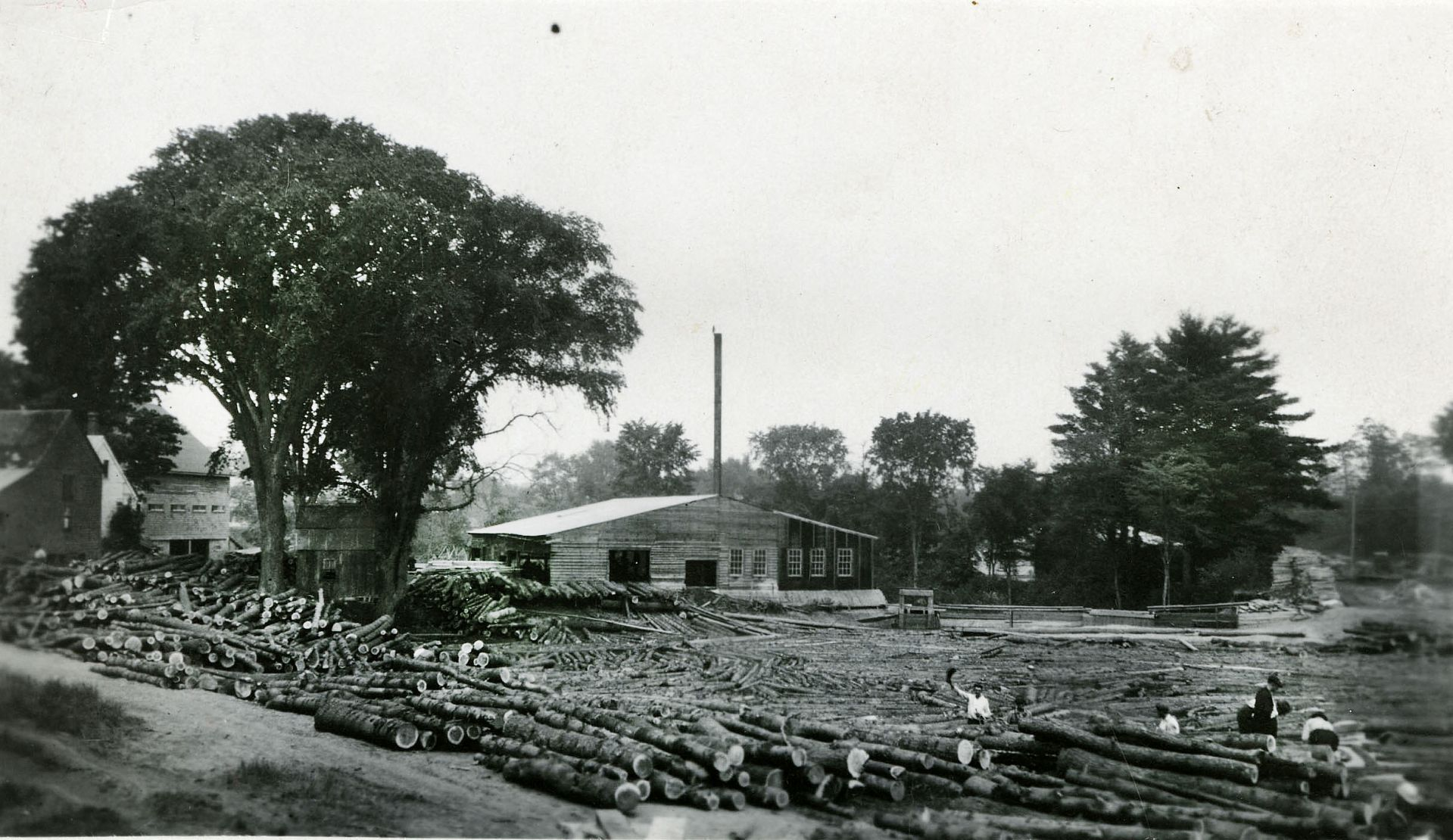 Circa 1932, white pine logs from the Bates Forest await processing at a mill pond in Alfred, Maine. (Muskie Archives and Special Collections Library)