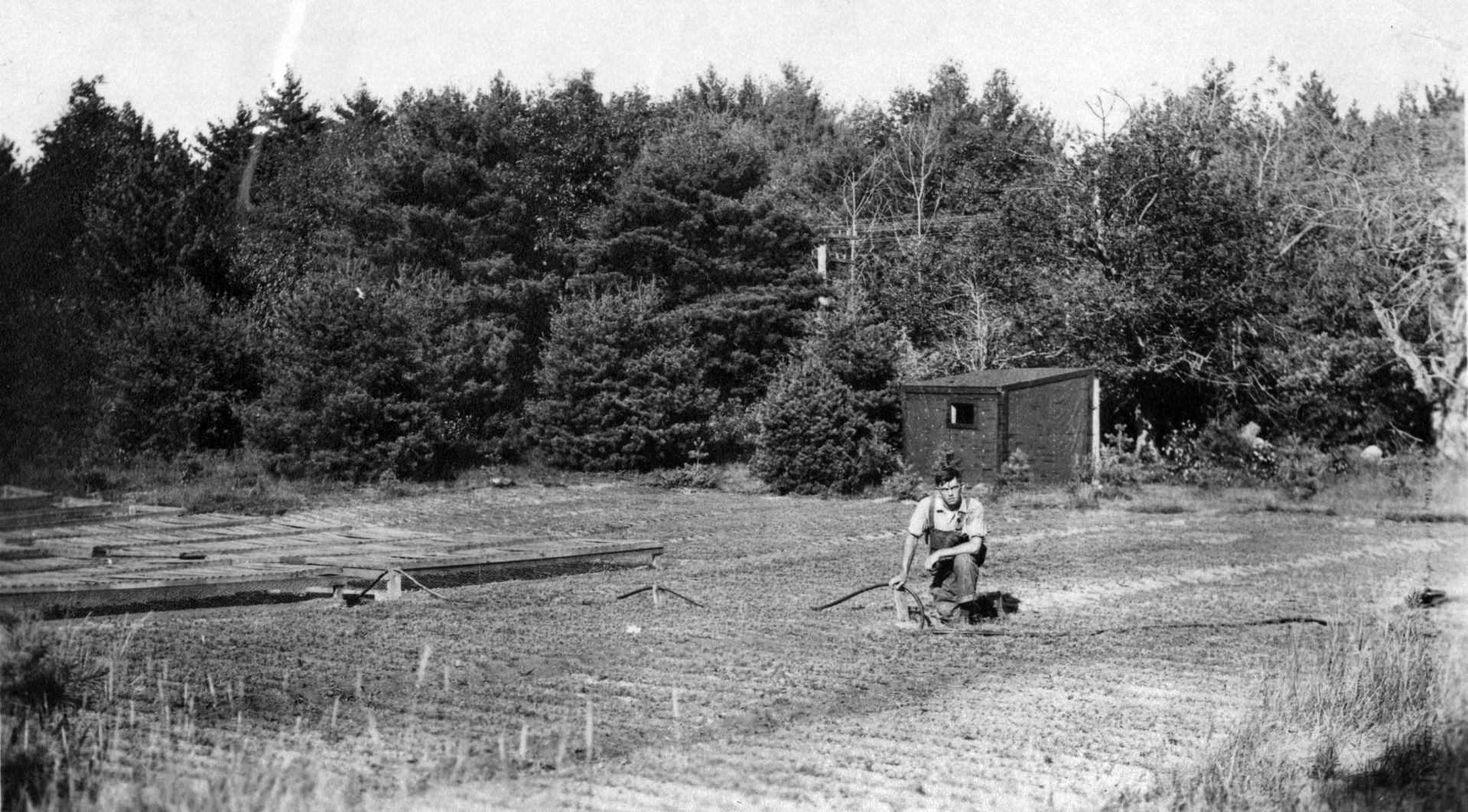 An unidentified worker tends to seedlings at the Bates Forest in this undated photograph. (Muskie Archives and Special Collections Library)
