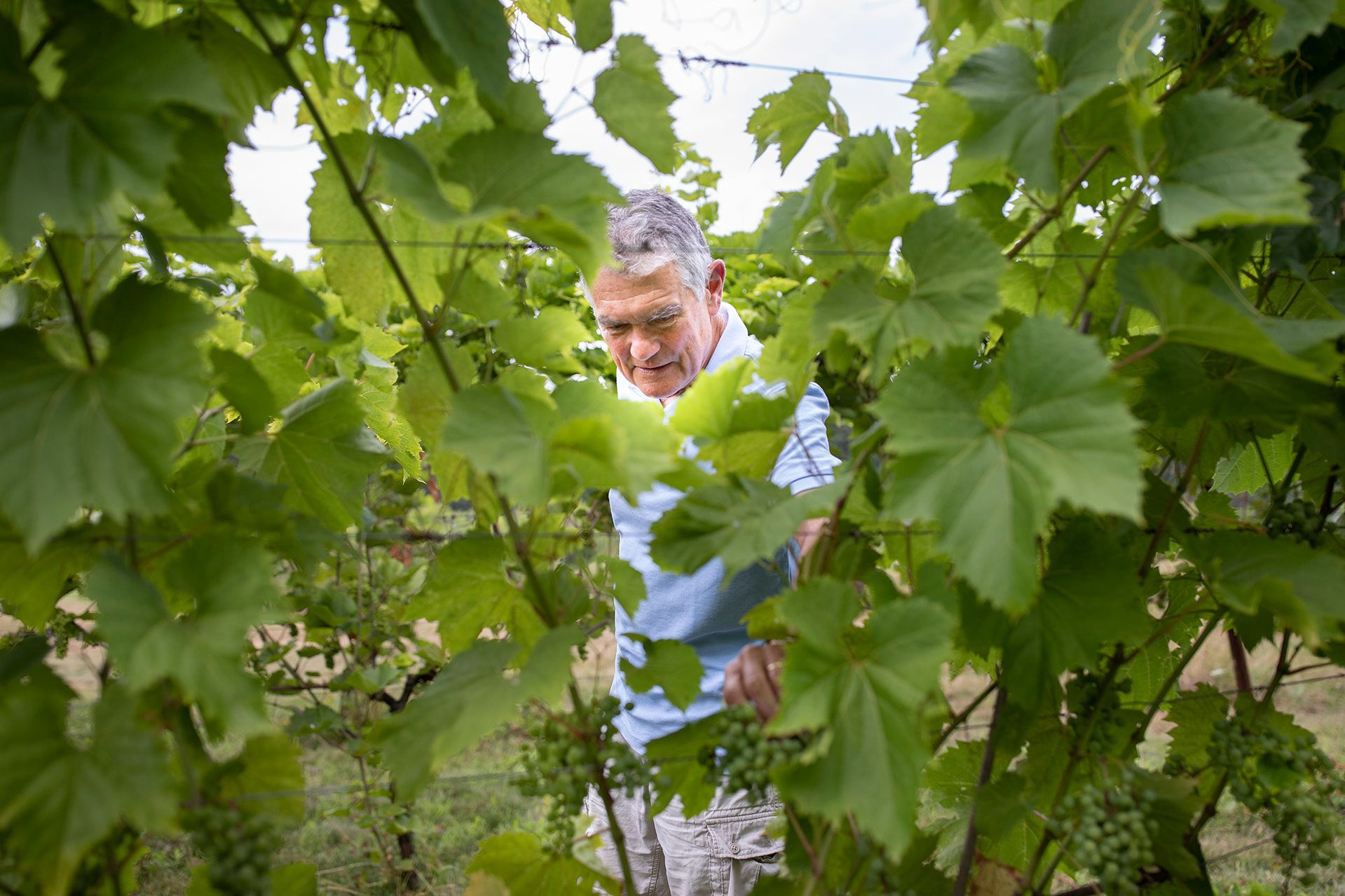 Just up the coast from Ocean Park, Bill Holt poses in his vineyard, located behind his year-round home in Cape Elizabeth. (Phyllis Graber Jensen/Bates College)