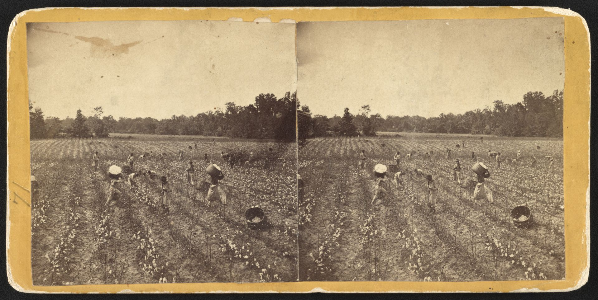 African Americans, possibly slaves, pick cotton near Montgomery, Ala., in 1860, (Lakin, J. H, photographer. [186] https://www.loc.gov/item/2012648057/0