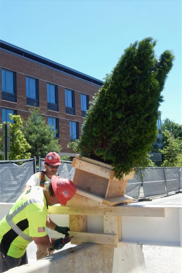 From left, Consigli carpenter Chad Chalmers and job site foreman Shannon Kenney attach the ceremonial evergreen to the topping-off beam. (Doug Hubley/Bates College)
