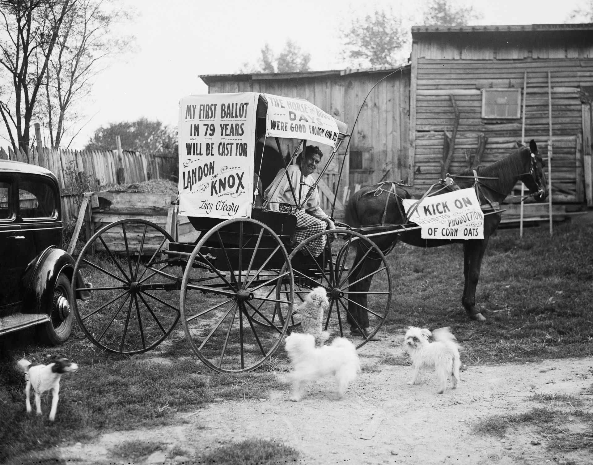 HEC/33900/33957a.tif  Votes for first time at 79. Arlington, VA, Oct. 15. This is Mrs. O'Leary (not the Mrs. O'Leary who kissed the cow who kicked over the lantern to start the Chicago fire) but Mrs. Lucy O'Leary of this town who will cast her first vote on November 3 at age 79, for Gov. Landon. She now lives on small government pension with the aid of a small garden  Votes for first time at 79. Arlington, VA, Oct. 15. This is Mrs. O'Leary (not the Mrs. O'Leary who kissed the cow who kicked over the lantern to start the Chicago fire) but Mrs. Lucy O'Leary of this town who will cast her first vote on November 3 at age 79, for Gov. Landon. She now lives on small government pension with the aid of a small garden