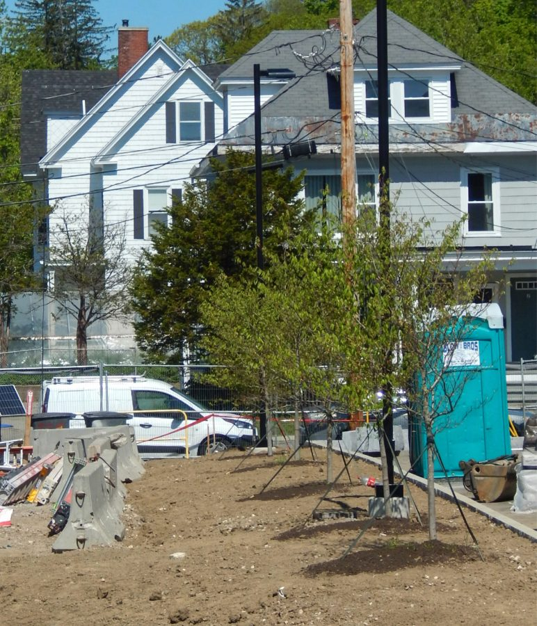 Trees are starting to appear on the south side of the Bonney building lot. (Doug Hubley/Bates College)