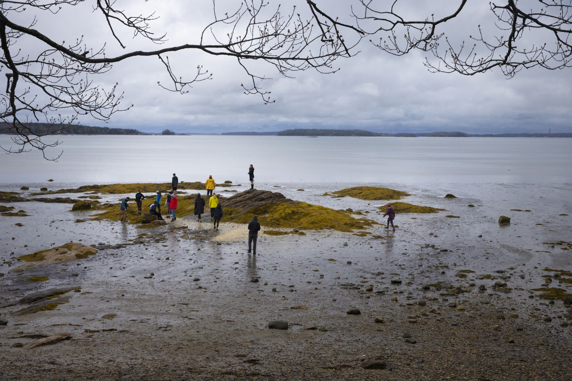 After their work at the barn, everyone decamped to the Wolfe's Neck shoreline to take in views of Casco Bay and its islands. (Phyllis Graber Jensen/Bates College)