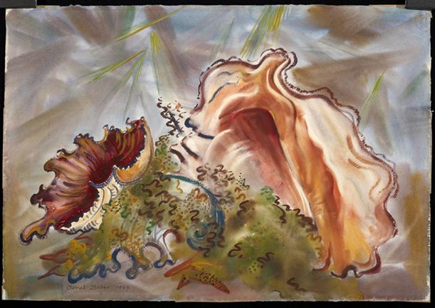 Conch Shell, Carol C. Bates, (1893?, United States), watercolor, Gift of the Gardiner Maine Library Association 1959