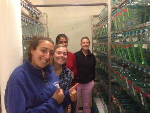 The 2014 Summer Group in the MDIBL fish room: Sophie, Katie, Roshni, and Larissa