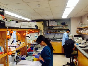 Williams Lab on a busy Saturday morning in October.