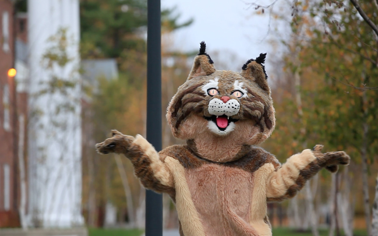 What Does the Bobcat Say?